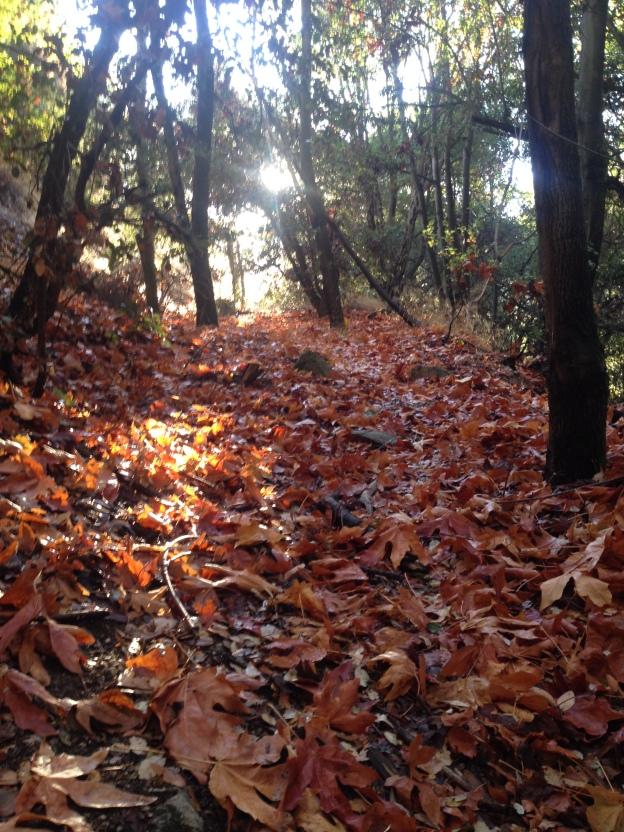 fall foliage mt wilson