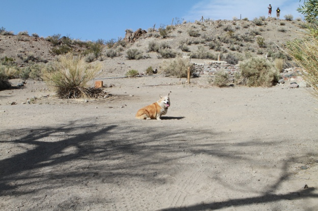 "nabby corgi ""barker ranch"" ""death valley"""