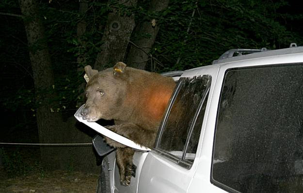 bad-bear-1-145-full
